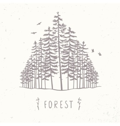 Forest tall trees vector