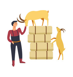 goat breeding by farmer man person with animals vector image