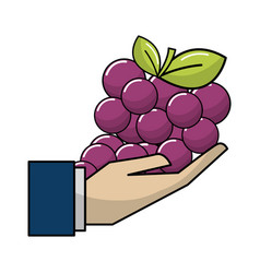 Organic grape fruit in the hand icon vector