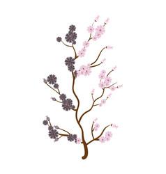 Sakura japanese plant icon vector