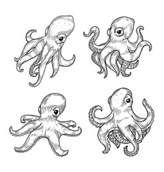 Set of isolated cartoon baby or kid octopus or vector