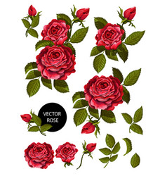 set red roses and elements for your design vector image