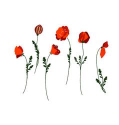 vintage poppy set wedding flowers bundle vector image
