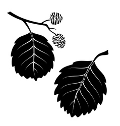 Alder leaves pictogram set vector