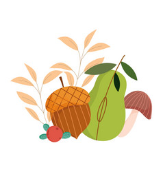 autumn acorn pear mushroom foliage isolated design vector image
