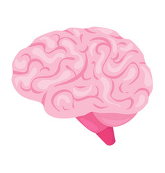 brain organ vector image