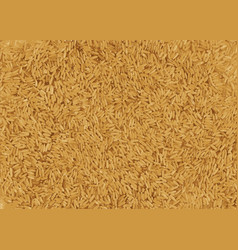 Brown rice vector