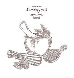 Hand drawn lemongrass bunch mortar with fresh vector