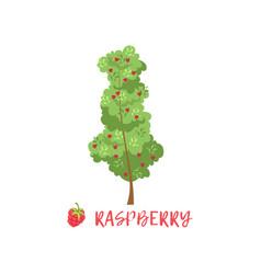 Raspberry garden berry bush with name vector