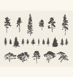 Set silhouettes trees pine fir cedar sketch vector
