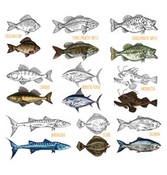 Side view on isolated fish catch sketches vector