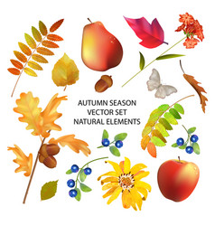 Autumn season collection vector