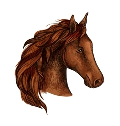 Brown stallion horse head sketch vector