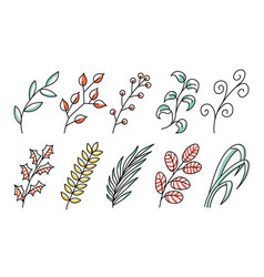 collection forest fern art foliage natural leaves vector image