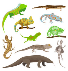 different lizard reptile animals isolated on white vector image