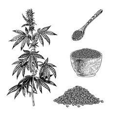 Hand drawn set hemp plant with cones bowl vector