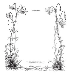 Lily of the field in this border vintage engraving vector