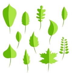 Spring green leaves in flat style set vector image