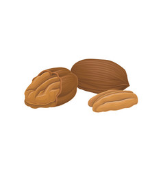 icon of whole and opened pecan nuts vector image