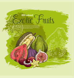 poster of exotic tropical fruits vector image
