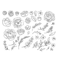 set elements flowers peonies and leaves vector image