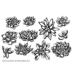 set hand drawn black and white succulent vector image