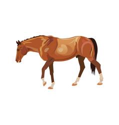 Wandering horse vector