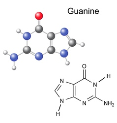 Chemical structural formula and model of guanine vector image vector image