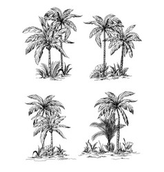set tropical palm trees with leaves vector image