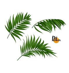 three palm leaves set vector image