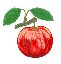 Red apple with green leaves vector image vector image