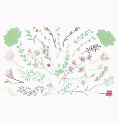 Colorful drawn herbs plants and flowers vector