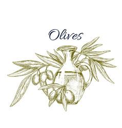 olive oil jug with fruit on branch sketch vector image