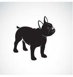 bulldog design on white background pet animals vector image