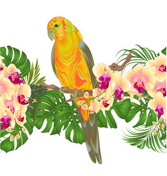 Floral border seamless background and sun conure vector