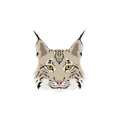 head of lynx isolated on white background vector image vector image