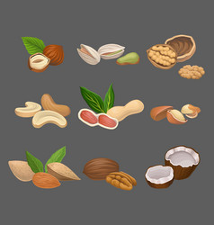 various kinds of nuts hazelnut pistachio walnut vector image