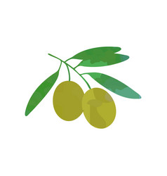 branch olive with green foliage vector image