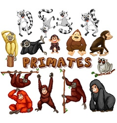 Different kind of primates vector