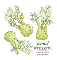 Fennel set vector
