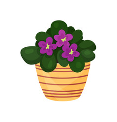 Purple violet flower houseplant potted flower vector