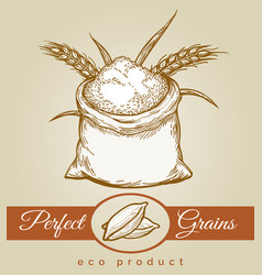 eco grains product sketch vector image