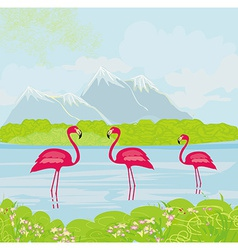 three pink flamingos in the water vector image vector image