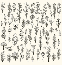 Collection of handdrawn doodle herbs and flowers vector