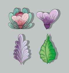 Flowers and leaves plants herbal botany set vector