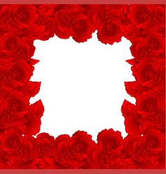 red carnation flower border dianthus caryophyllus vector image