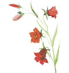 Red flower of campanula vector