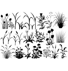silhouette field flowers and grass butterfly vector image