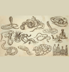 snakes - an hand drawn pack line art vector image