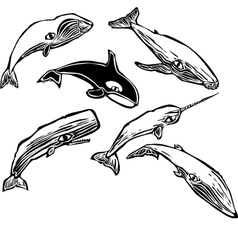 Whale Group vector image vector image